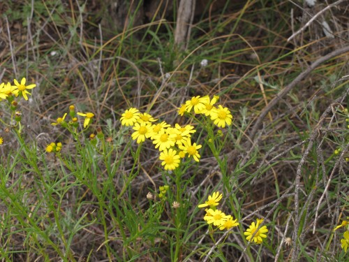 Wildflowers in the Greg Duggan Nature Reserve