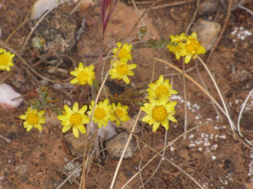Wildflowers in the Greg Duggan Reserve