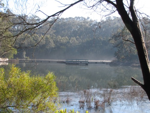 Laratinga Wetlands on a cold misty winter's morning