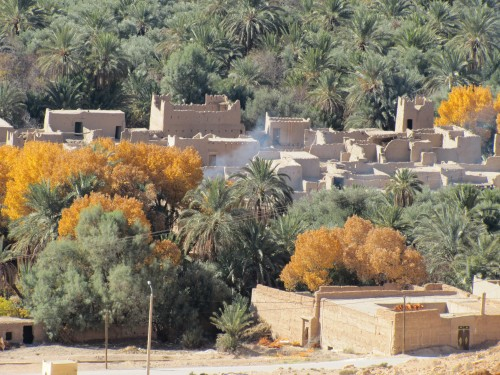 Date palms in the Ziz Valley