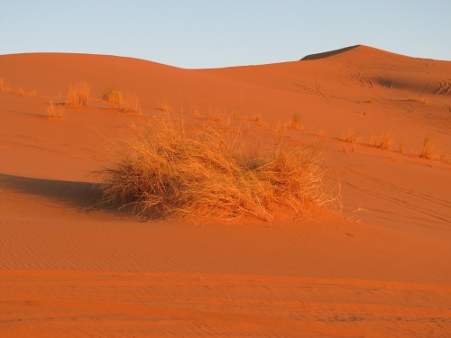 Early morning sun on the Sahara Desert sand