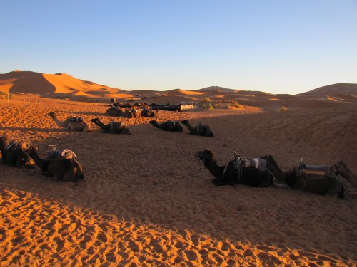 Our camels waiting to take us into the Sahara
