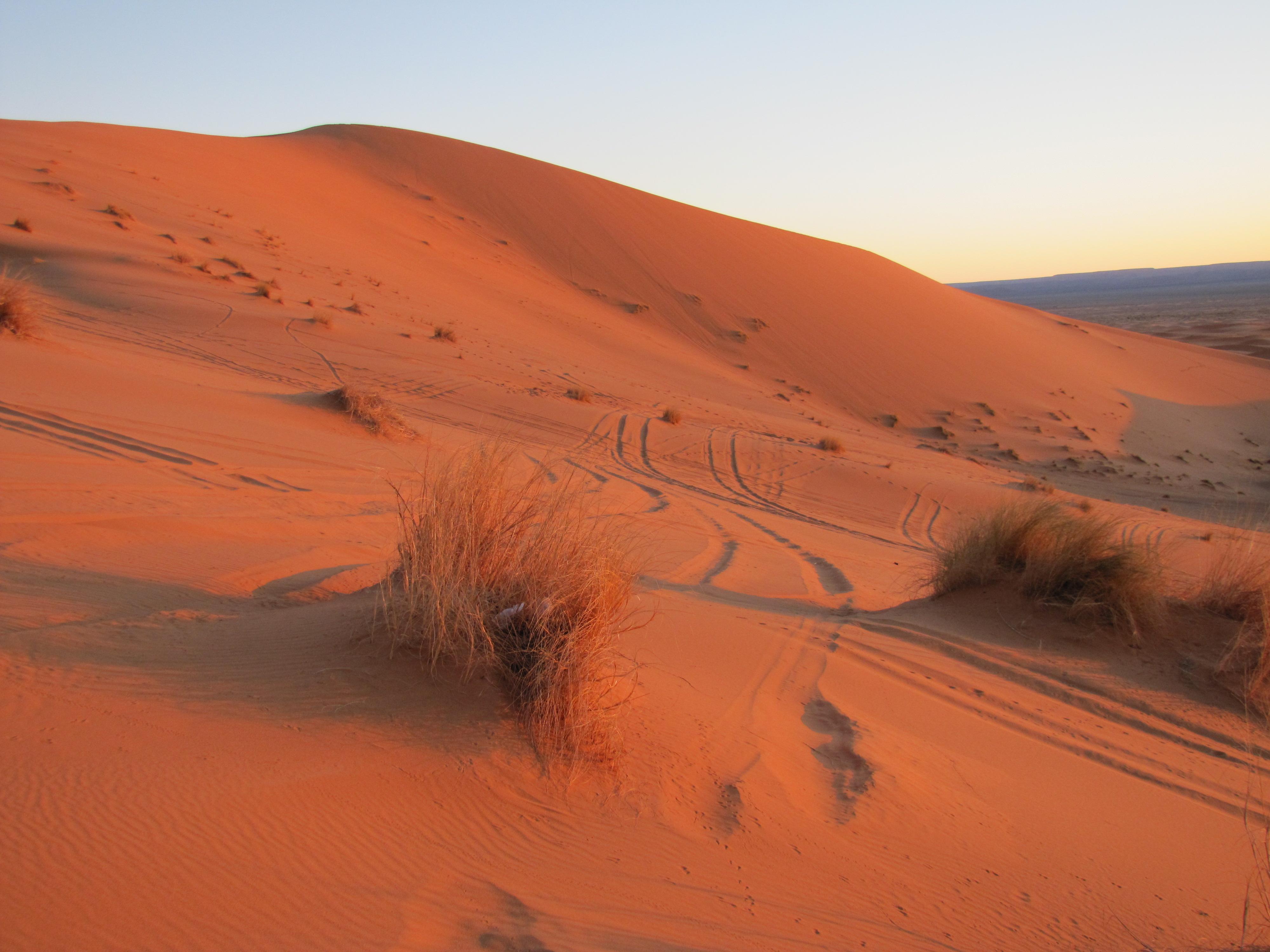 plants in the sahara desert trevors travels