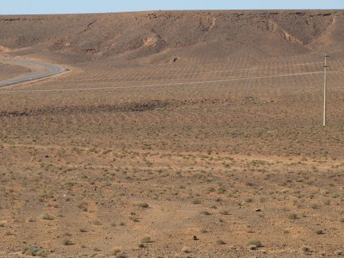 Australian saltbush plantation in Morocco